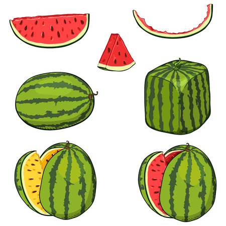Vector Set of Watermelons. Whole and Cut Pieces Fruit