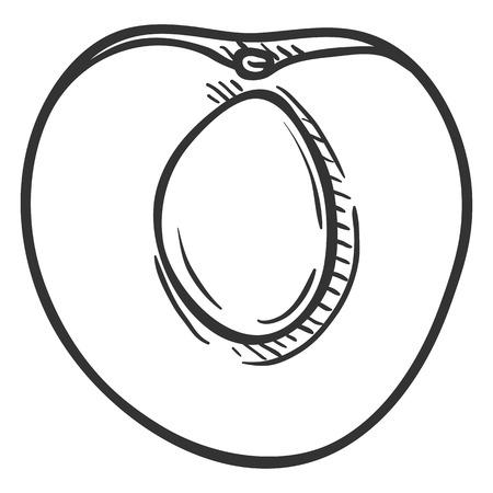 Vector Sketch Half of Apricot Ilustração
