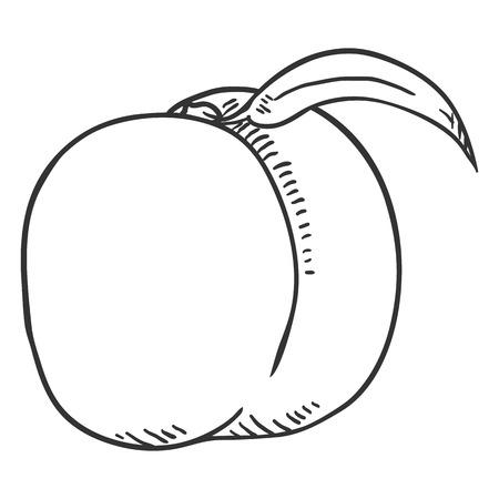 Vector Sketch Whole Peach