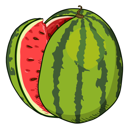 Vector Cartoon Watermelon with Red Pulp Illustration