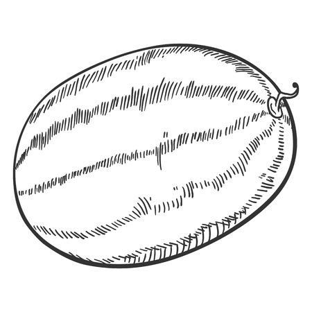 Vector Sketch Whole Watermelon