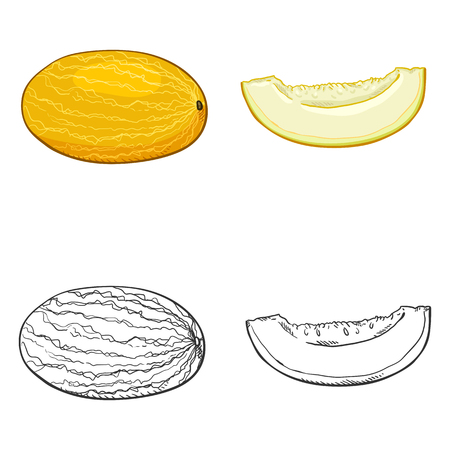 Vector Set of Sketch and Cartoon Melon Illustrations