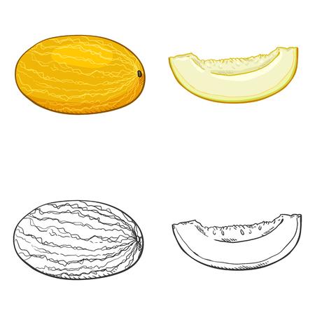 Vector Set of Sketch and Cartoon Melon Illustrations