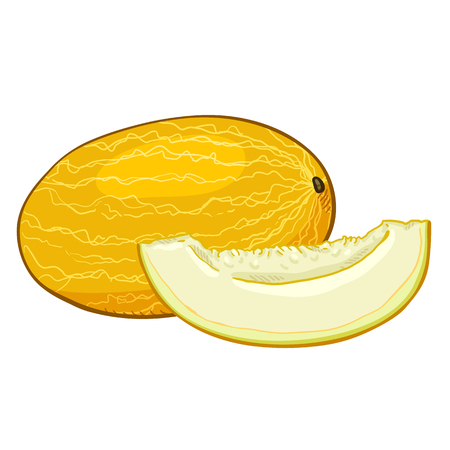 Vector Cartoon Yellow Melon and Piece of it. Illustration