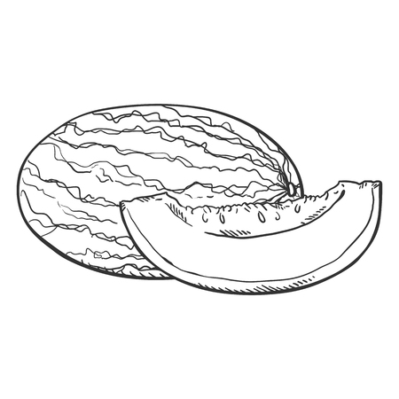 Vector Sketch Melon and Piece of it.