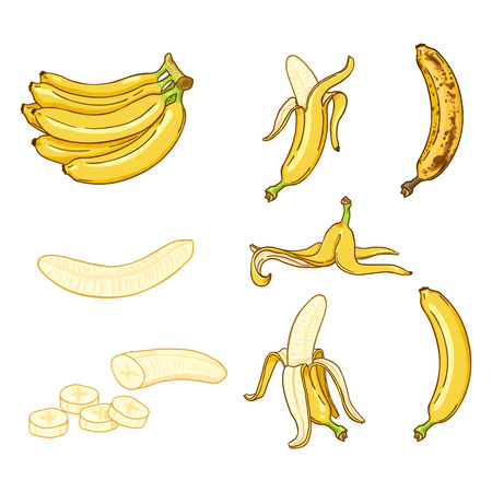 Vector Cartoon Set of Various Banana Illustrations Reklamní fotografie - 124993824