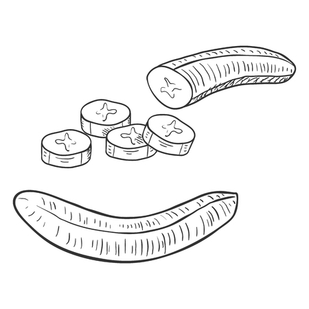 Vector Set of Sketch Peeled Banana. Whole and Sliced