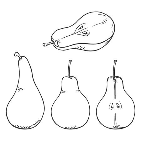 Vector Set of Sketch Pear Illustrations Ilustracja
