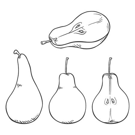 Vector Set of Sketch Pear Illustrations Ilustração