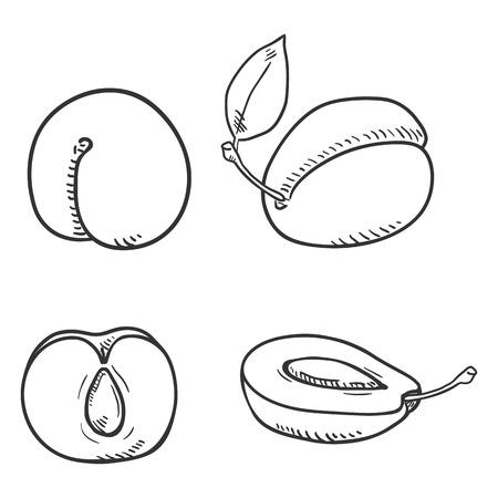 Vector Set of Sketch Plum Illustrations Ilustração