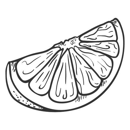 Vector Sketch Citrus Fruit Slice. Part of Orange Fruit.