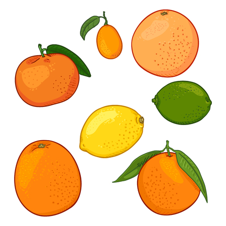 Vector Set of Cartoon Citrus Fruits. Lemon, Orange, Tangerine, Grapefruit, Lime, Kumquat.