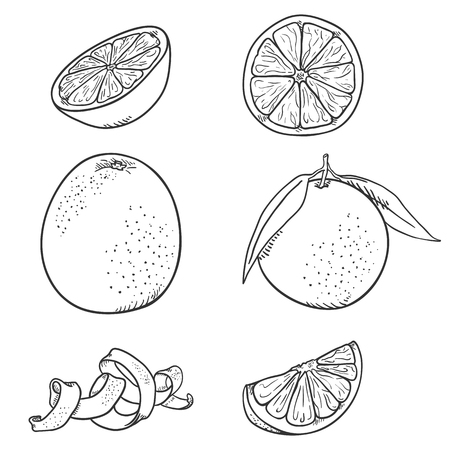 Vector Set of Sketch Orange Fruits. Whole and Sliced.