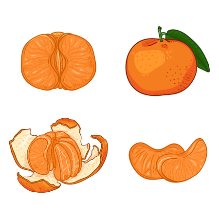 Vector Set of Cartoon Tangerines. Whole, Peeled and Sliced