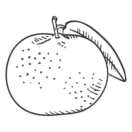 Vector Sketch Tangerine with Leaf Vector Illustratie