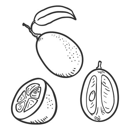 Vector Set of Sketch Kumquat Fruits. Whole, Peeled and Sliced