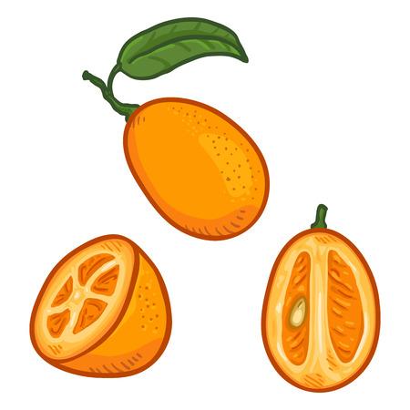 Vector Set of Cartoon Kumquat Fruits. Whole, Peeled and Sliced