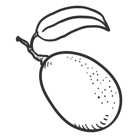 Vector Sketch Kumquat Fruit