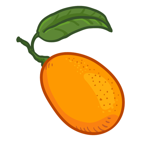 Vector Cartoon Kumquat Fruit with Green Leaf. Ilustração