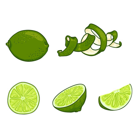 Vector Set of Cartoon Lime Fruits. Whole, Peeled and Sliced Illustration