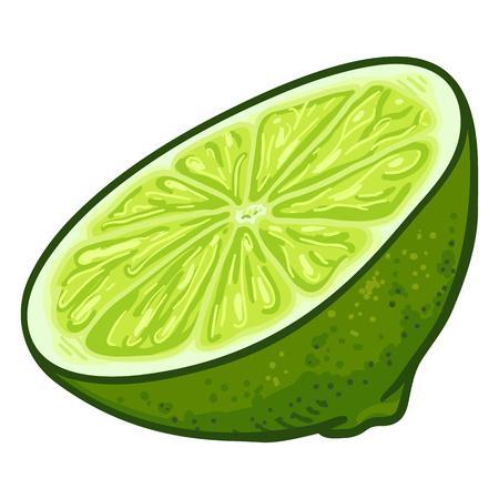 Vector Cartoon Half Cut of Lime Fruit Illustration