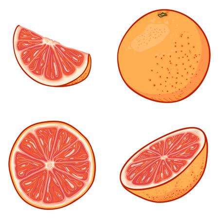 Vector Set of Cartoon Grapefruits. Whole, Peeled and Sliced Illustration