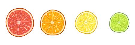 Vector Set of Round Citrus Slices. Red Grapefruit, Orange, Yellow Lemon and Green Lime. Illustration