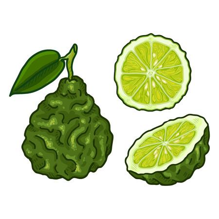 Vector Set of Cartoon Bergamot Fruits. Whole, Peeled and Sliced Illustration