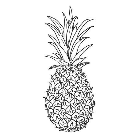 Vector Sketch Whole Pineapple