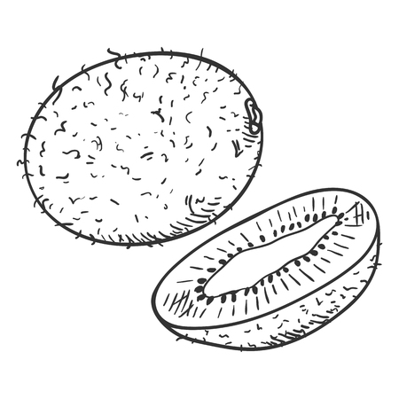 Vector Sketch Kiwi Fruit. Whole and Cut. Vector Illustration
