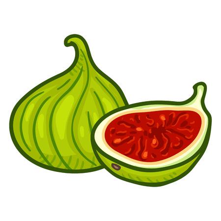 Vector Cartoon Fresh Green Fig Fruit