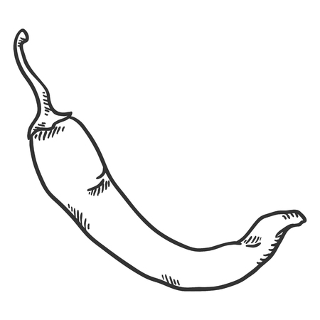 Vector Sketch Chilli Pepper