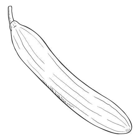 Concombre de croquis noir de vecteur