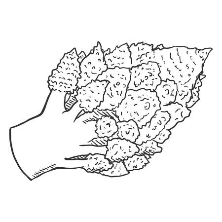 Vector Sketch Romanesco Cauliflower Ilustração