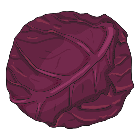 Vector Cartoon Red Cabbage