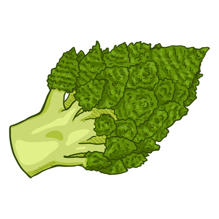 Vector Cartoon Green Romanesco Cauliflower