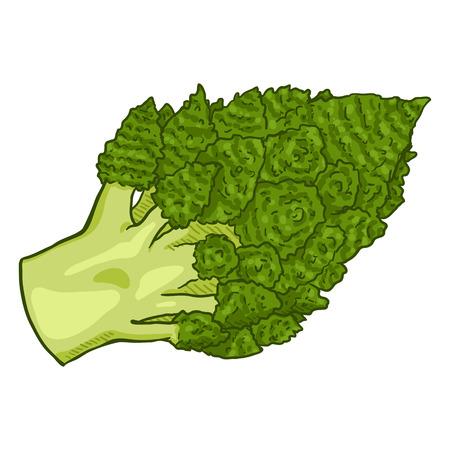 Vector Cartoon vert chou-fleur romanesco Vecteurs