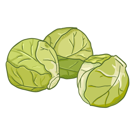 Vector Cartoon Light Green Brussels Sprouts
