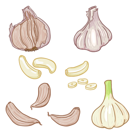Vector Set of Cartoon Garlic Illustrations. Whole Bulb and Cloves.
