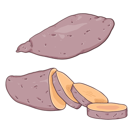Vector Cartoon Sweet Popato Yam. Whole and Sliced Illustration