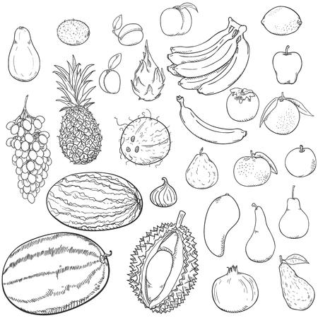 Vector Set of Hand Drawn Sketch Fruits