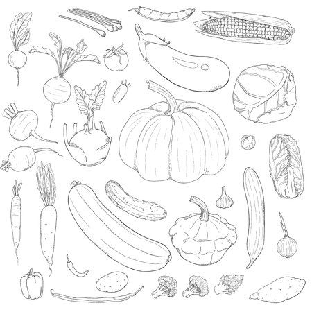 Vector Set of Hand Drawn Sketch Vegetables  イラスト・ベクター素材