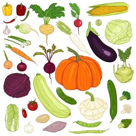 Vector Set of Cartoon Color Vegetables Ilustração