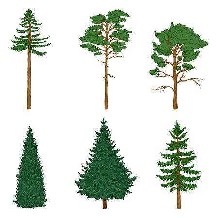 Vector conjunto de árboles de pasador de dibujos animados, cedro y abeto. Árboles de hoja perenne.