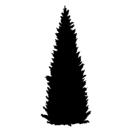 Vector Black Silhouette of Coniferous Tree