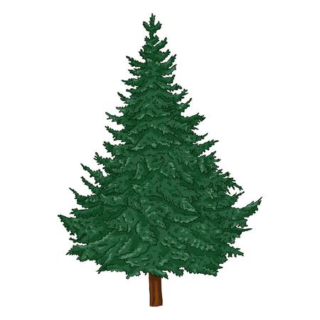 Vector Cartoon Evergreen Pine Tree on White Background