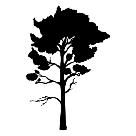Vector Black Silhouette of Pine Tree