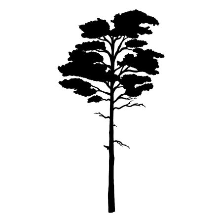 Vector Black Silhouette of Pine Tree