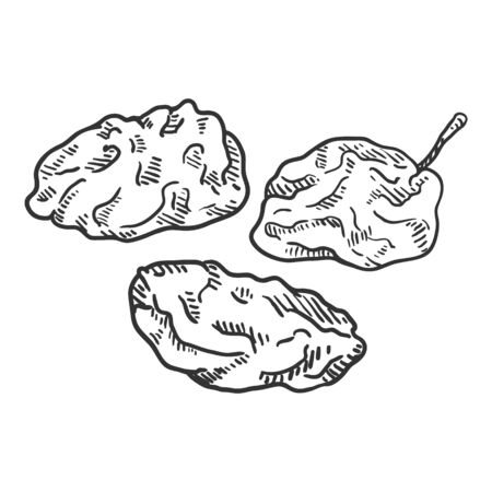 Vector Sketch Illustration - Prune. Dried Plum.