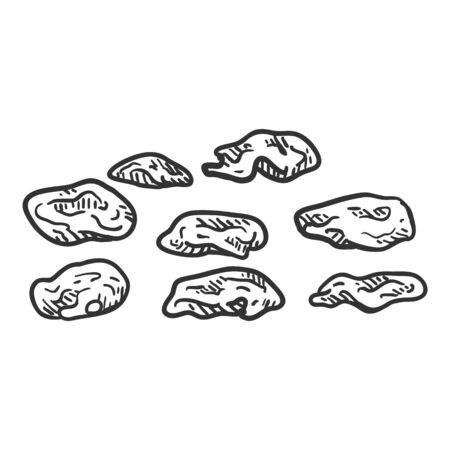 Vector Sketch Illustration - Raisin. Dried Grapes